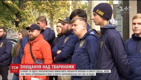 В Киеве и Одессе активисты требуют наказать виновных в смерти овец, которых держали на границе