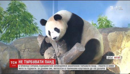 У заповіднику Китаю відвідувачам заборонили фотографуватись з пандами