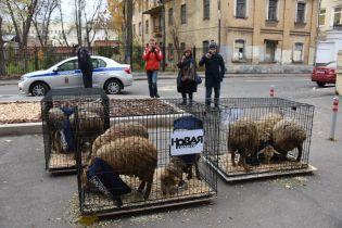 """Чергові погрози. Журналістам """"Нової газети"""" в РФ завезли клітки з вівцями"""