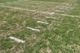 """""""Тоттенхэм"""" и Манчестер Сити сыграют на огороде: как выглядит """"Уэмбли"""" перед матчем"""