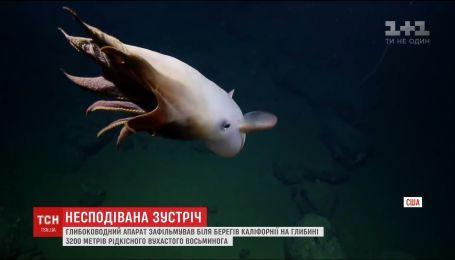 Исследователи засняли редкого осьминога с плавниками, напоминающими уши