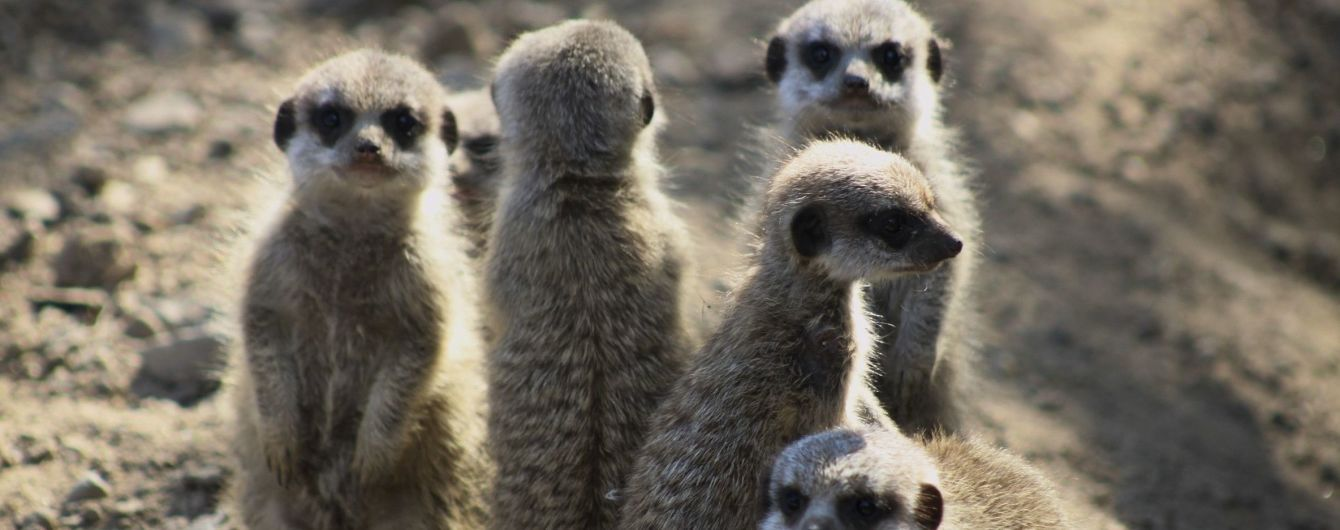 За лише півстоліття людство знищило 60% тварин на Землі – WWF