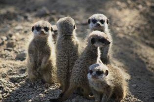 За полвека человечество уничтожило 60% животных на Земле – WWF