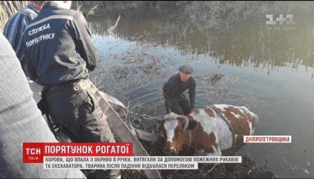 На Дніпропетровщині врятували корову, яка впала з обриву в річку