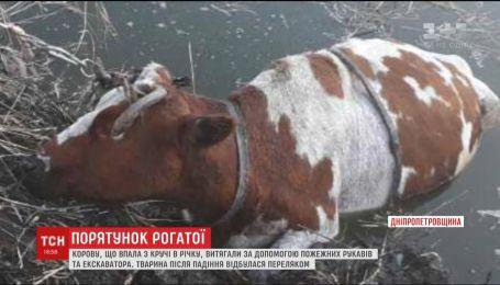 Спасатели задействовали экскаватор, чтобы вытащить корову из реки
