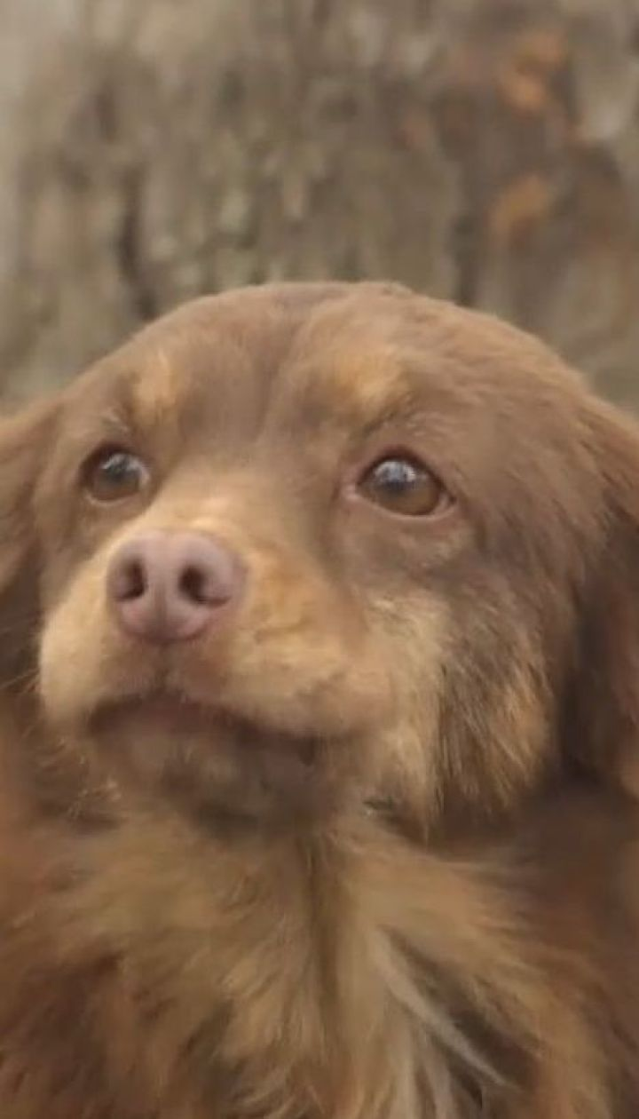 Зграї бродячих собак окупували Миколаїв