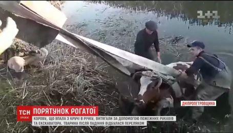 На Днепропетровщине спасли корову, которая упала с обрыва в реку