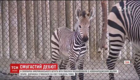 У зоопарку штату Юта публіку познайомили з новонародженою зеброю