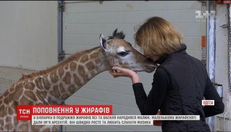 В Одесском зоопарке пополнение, там родился жирафенок