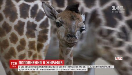 Работники одесского зоопарка рассказали о первых днях жизни новорожденного жирафенка