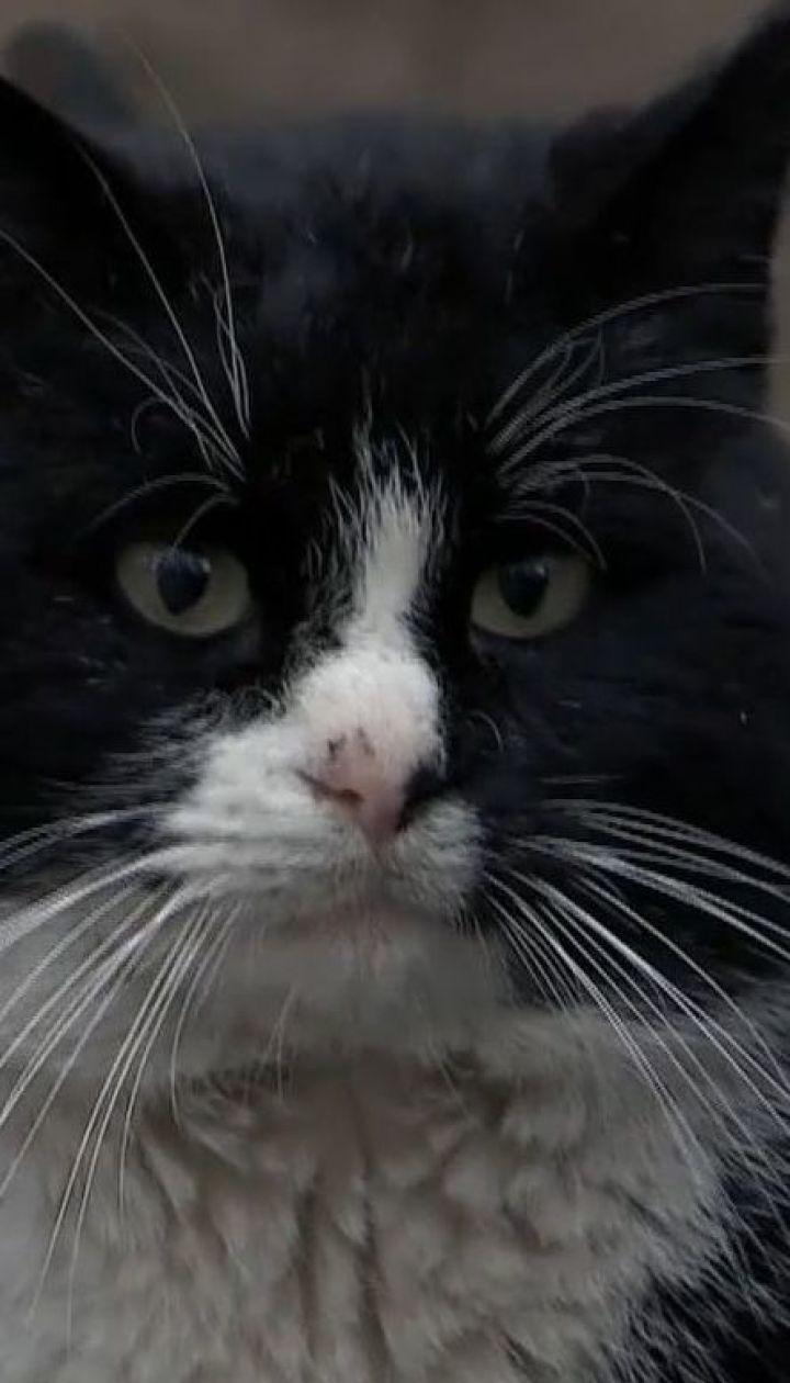 Коти чи собаки: кого з хвостатих українці люблять більше