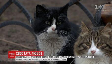 Коты или собаки: кого из хвостатых украинцы любят больше