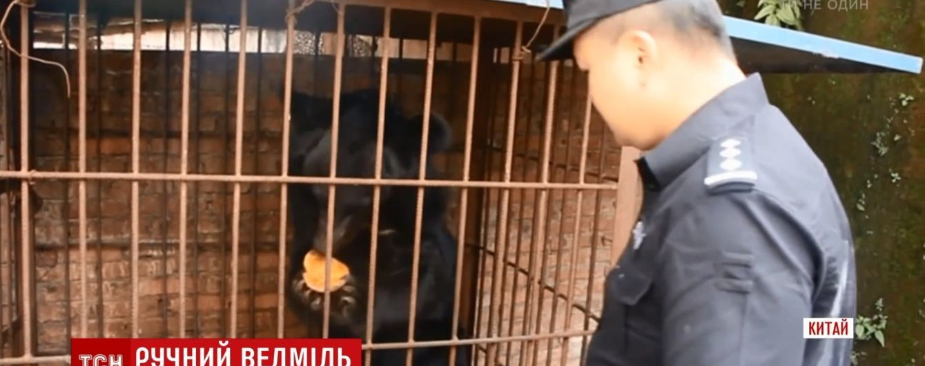 У Китаї пенсіонерка приручила і шість років доглядала здоровезного ведмедя