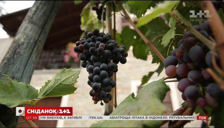Мій путівник. Північна Італія - літри вина під одним дахом та гаряча вода на вулиці