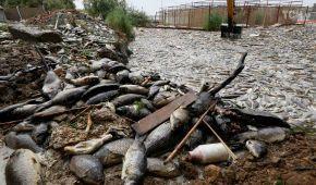 В Іраку стався масовий мор риби, через забруднення річокжиттюмільйонів людей загрожує небезпека