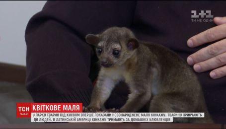 В парке животных под Киевом показали новорожденную кинкажу Майю