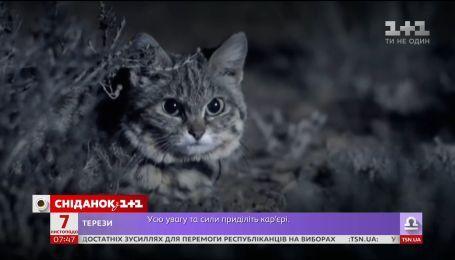 В Африке нашли самого опасного кота на планете