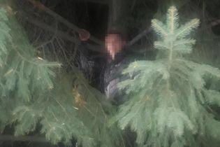 Во Львове грабитель залез на дерево, убегая от полиции