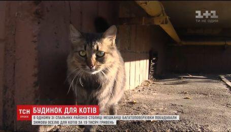 Жители многоэтажки построили для кошек домик за 19 тысяч гривен