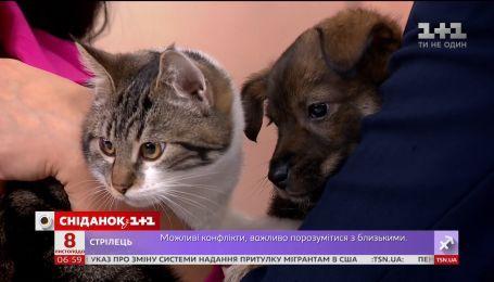 Кот Люк и пес Чак ждут своих хозяев