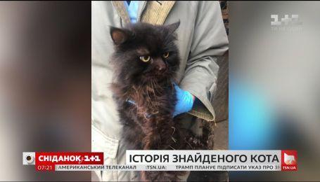 Лучанка нашла своего кота, которого потеряла пять лет назад