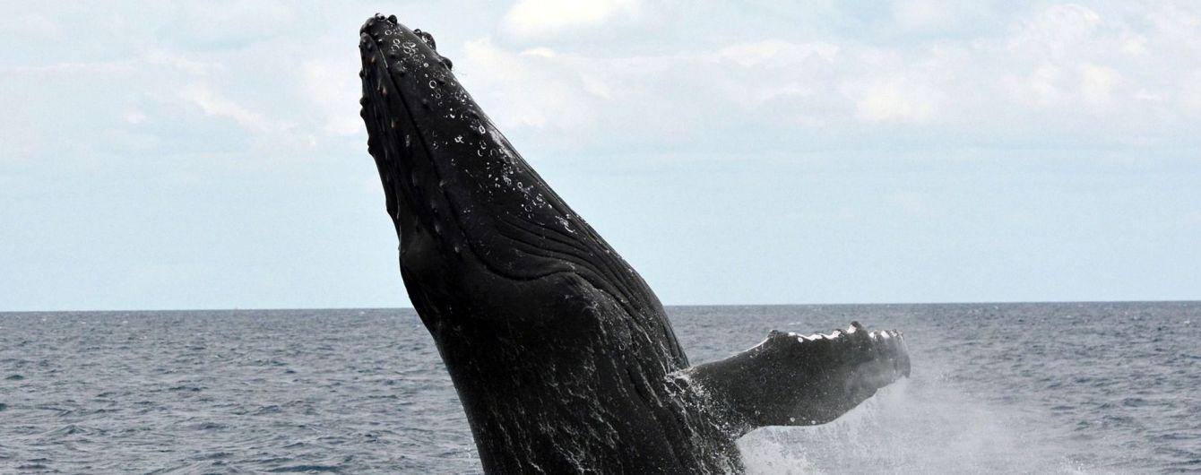 Япония окончательно решила возобновить охоту на китов