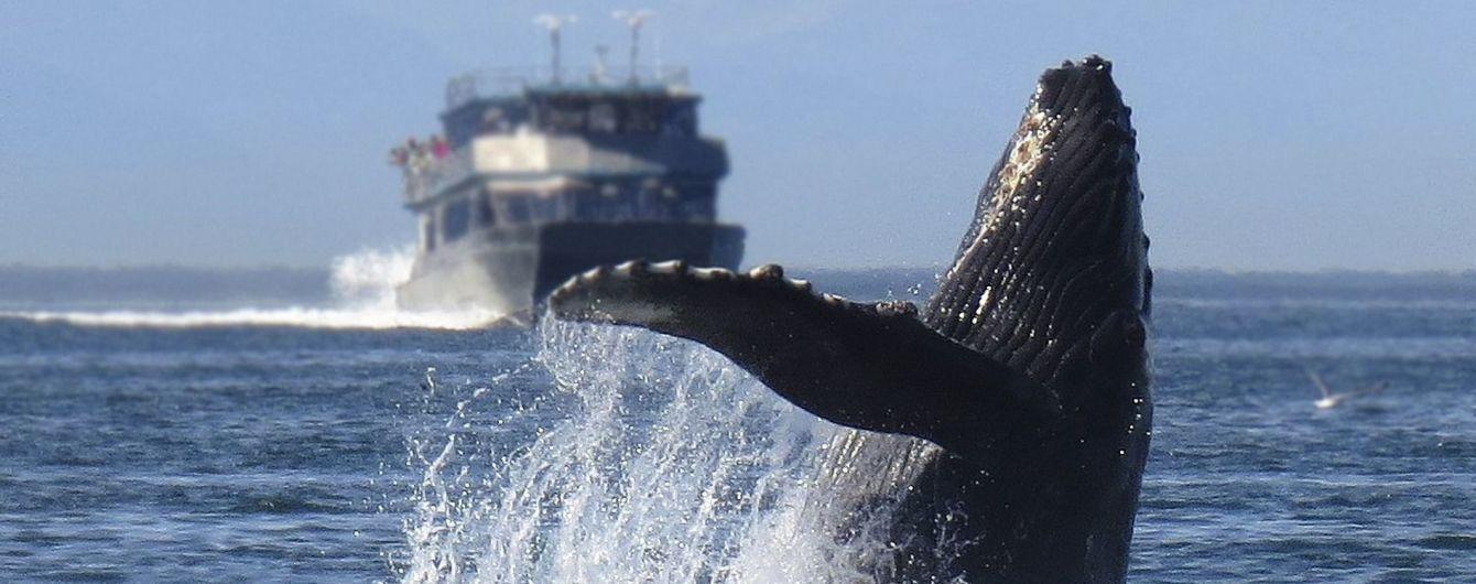 Какие страны охотятся на китов и угрожают их популяции. Инфографика