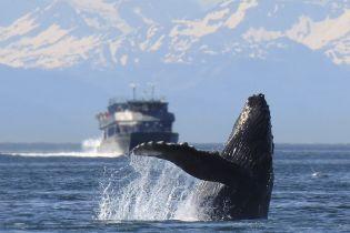 Які країни полюють на китів і загрожують їхній популяції. Інфографіка
