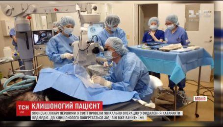 У Японії лікарі першими у світі провели операцію з видалення катаракти ведмедю