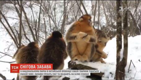 В китайском зоопарке показали, как животные радуются первым снегопадам