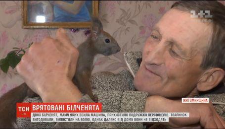 Супруги пенсионеров из Житомирщины приютили у себя двух бельчат