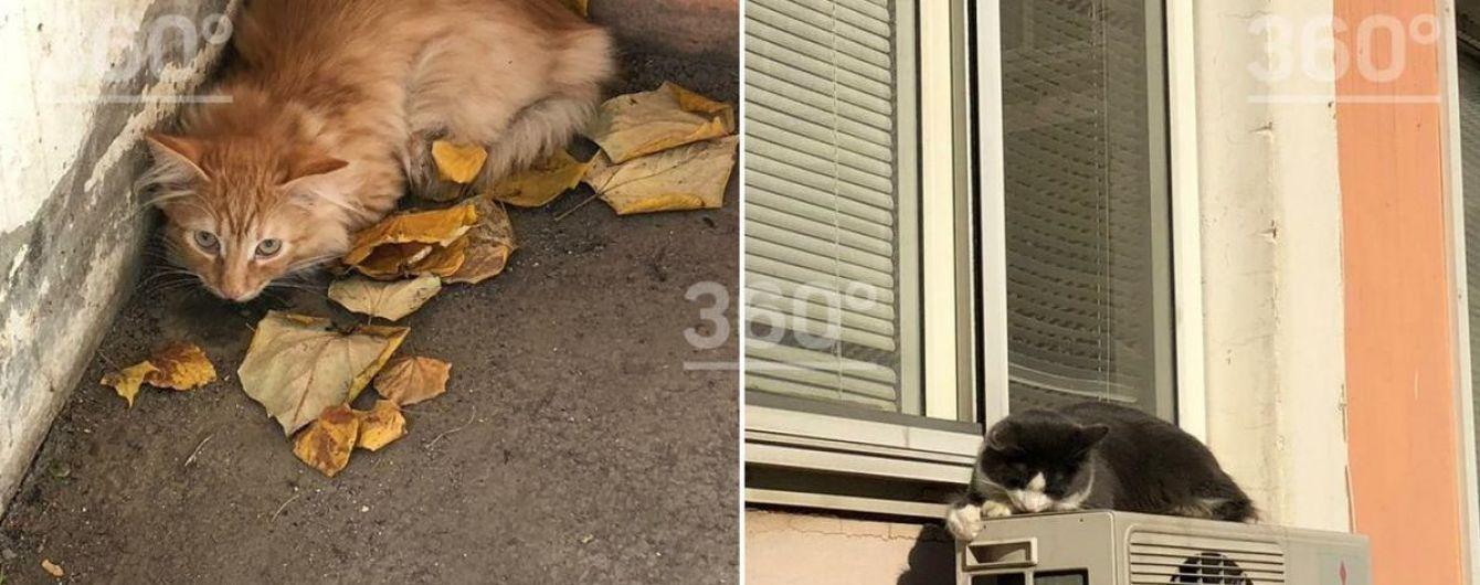 У Росії чоловік викинув 15 котів з балкона під ноги перехожим