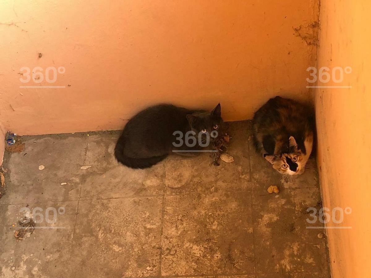 налякані коти жорстоке поводження