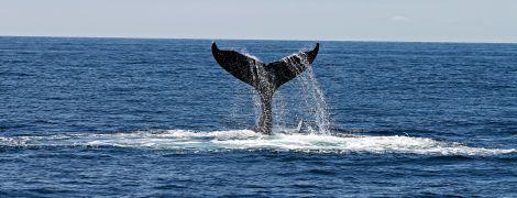 На подив учених після майже повного знищення популяції китів вдалося відновитися