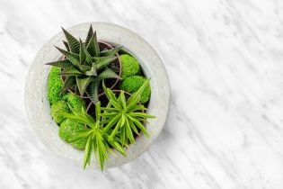 Могут ли цветы расти в кухне, ванной и коридоре