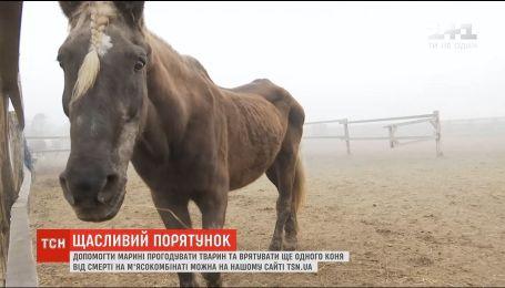 Лошади, собаки, кошки, аисты: семья из Черниговщины спасает брошенных животных