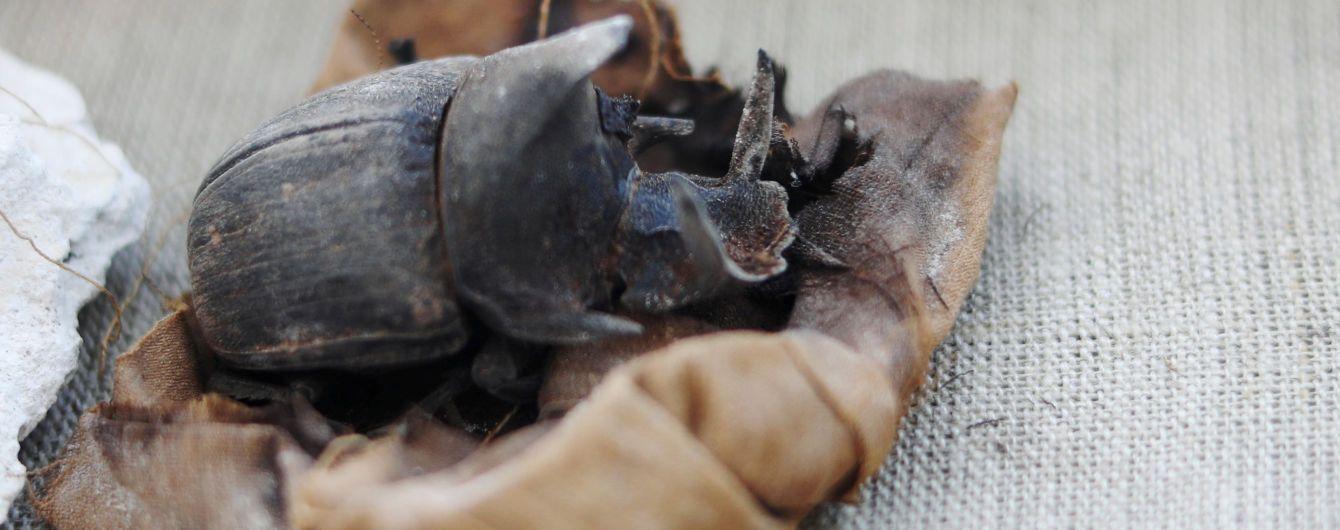 В Египте впервые нашли коллекцию мумифицированных жуков-скарабеев