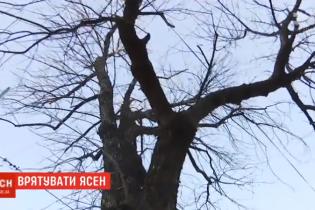 На Подоле киевляне потратили на лечение дерева 40 тысяч гривен