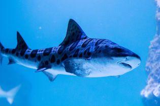 В Австралії неподалік пляжу акула напала на серфера