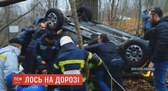 Автомобіль з іноземцями поблизу Чорнобильської зони збив лося