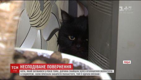 У Луцьку жінка знайшла свого кота, загубленого 5 років тому