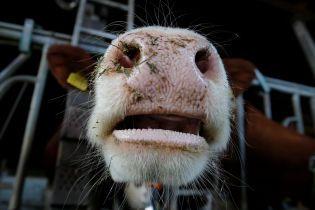 Убийство коров спровоцировало смертельные беспорядки на севере Индии