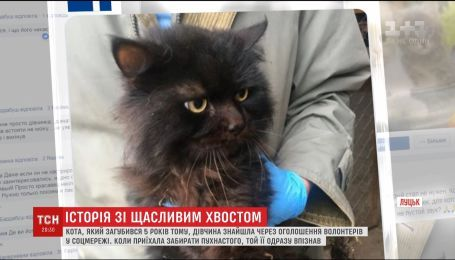 Жителька Луцька знайшла кота, який загубився 5 років тому