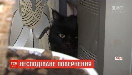 В Луцке женщина через 5 лет нашла своего потерянного кота