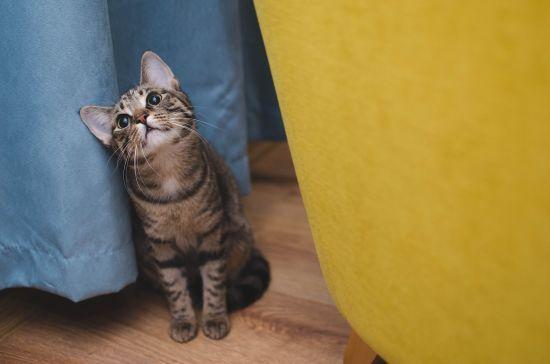 На Полтавщині чоловіка посадили до в'язниці за знущання над котом