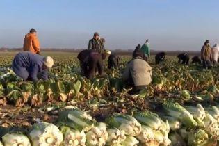 """Работники фермы на Одесчине, где освободили из """"рабства"""" 100 человек, стали на защиту своих работодателей"""