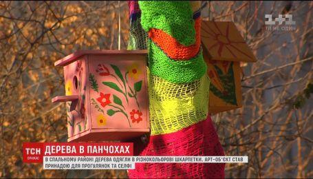 В спальном районе Киева несколько деревьев одели в разноцветные чулки