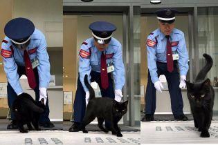 """Коты или охрана: в Сети следят за """"войной"""" четверолапых, которых не пускают в музей в Японии"""