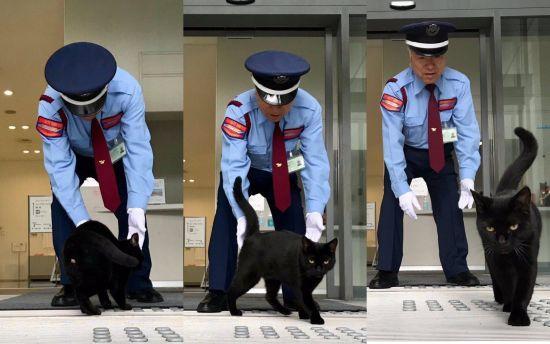"""Коти vs. охорона: у Мережі стежать за """"війною"""" чотирилапих, яких не пускають до музею у Японії"""