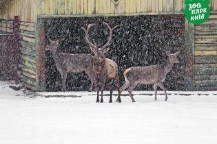 В Киевском зоопарке показали, как первый снег встретили местные животные